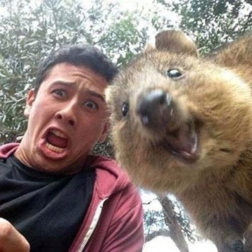 Lidé v Austrálii začali dělat selfies s Quokka a výsledky jsou fantastické