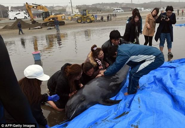 delfiny4