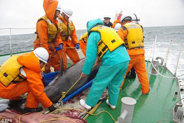 delfiny7