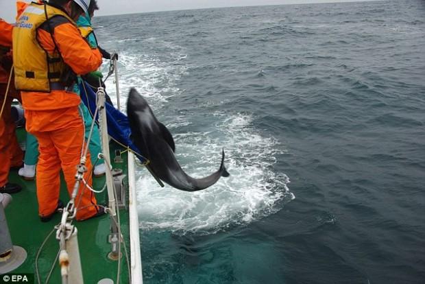 delfiny8