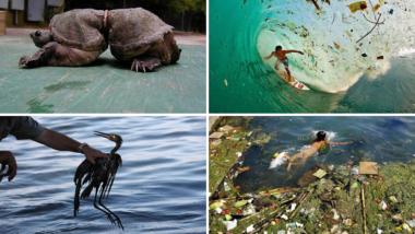 25 srdcervoucích fotografií následků znečištění, které vás přinutí se zamyslet