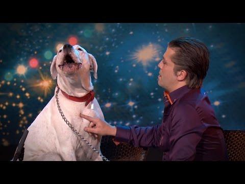 Pes zazpíval Whitney Houston v belgitské televizní show